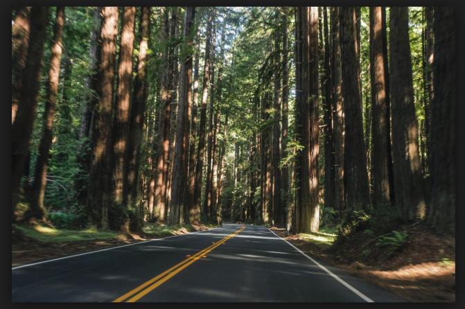Hwy 128 Navaroo Redwoods.png