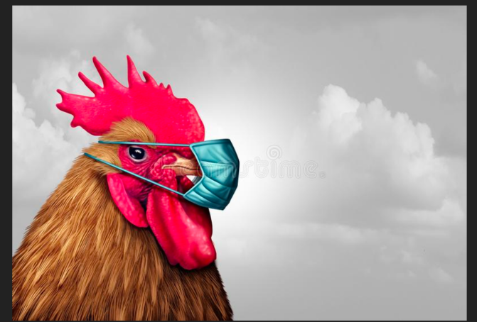 Chicken Mask.png